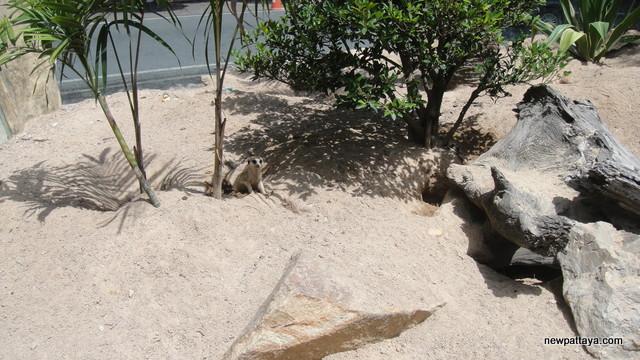 Khao Kheow Open Zoo - 5 August 2012 - newpattaya.com