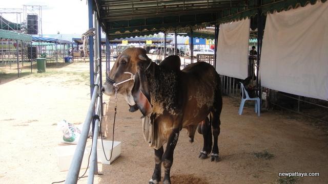 Pattaya International Livestock Show 2013 - 26 April 2013 - newpattaya.com