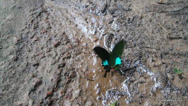 Butterfly in Khao Yai National Park - 27 July 2013 - newpattaya.com