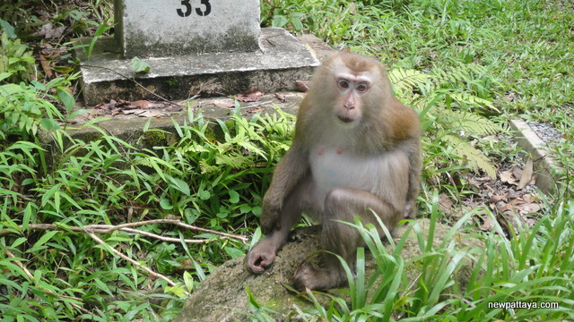 Monkey in Khao Yai National Park - 27 July 2013 - newpattaya.com
