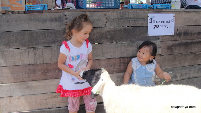 Pattaya Sheep Farm - 20 October 2013 - newpattaya.com